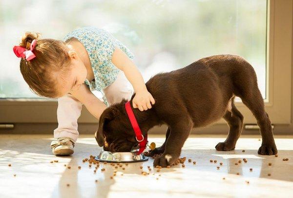 С какими домашними животными опасно оставлять малыша