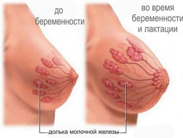 Точные признаки беременности